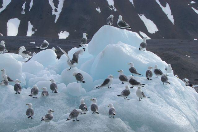 Spitzberg - Archipel du Svalbard - Norvège