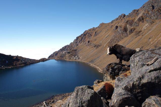 Helambu et lacs de Gosainkund - Népal