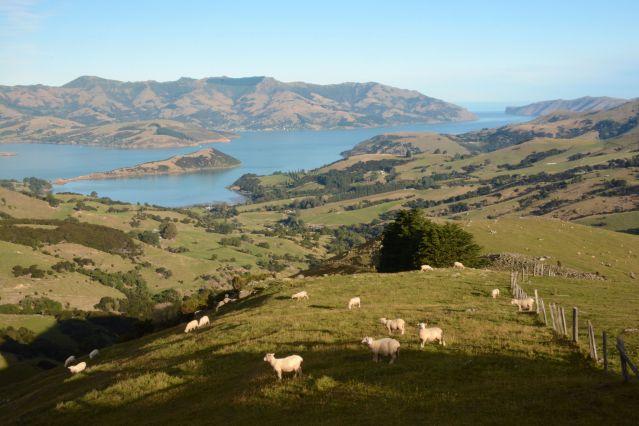 Akaroa - Péninsule de Banks - Nouvelle-Zélande