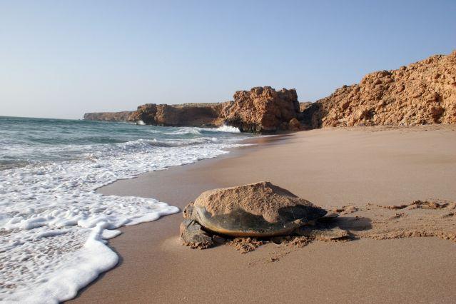 Plage de Ras al Jinz - Oman