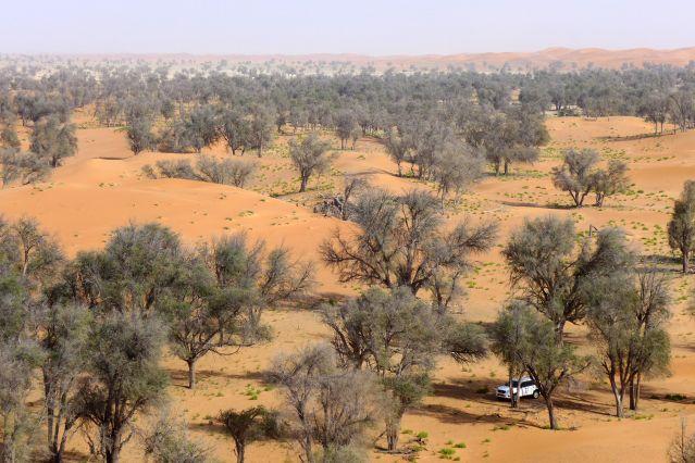 Nord du désert Rub al Khali - Oman