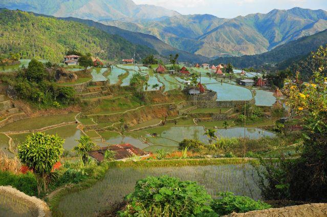 Rizières de Banaue - Province d Ifugao - Région administrative de la Cordillère - Luçon - Philippines