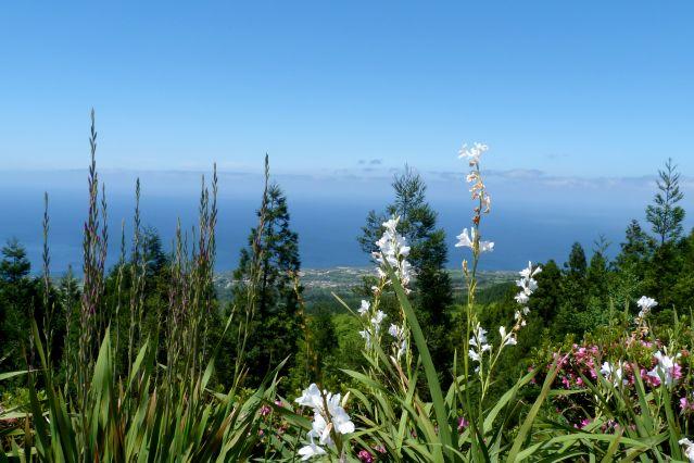 Île de São Miguel - Açores - Portugal