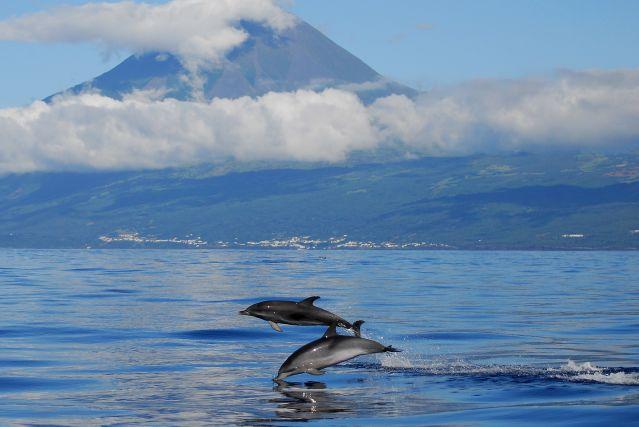 Voyage Escapade océane : volcans et baleines