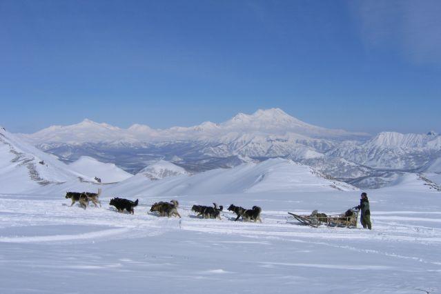 Chiens de traineaux sur la presqu île du Kamchatka - Russie