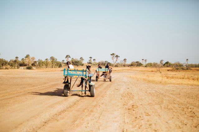 À travers la brousse pour rejoindre Mar Fafako - Sénégal