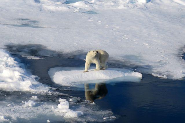 Voyage Cap sur les glaces du Spitzberg