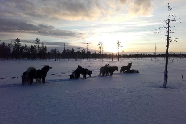 Voyage Dans les forêts de Laponie