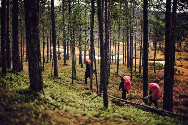 Voyage Découverte et aventure en Laponie suédoise