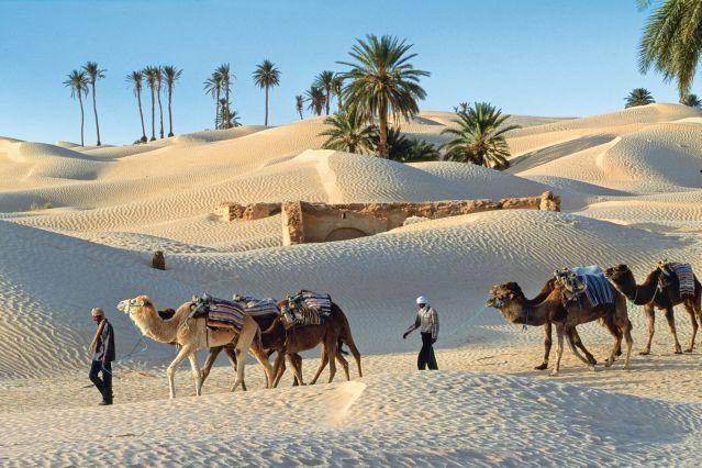 Randonn 233 E Avec Chameau Tunisie Oasis Et Dunes Du Grand