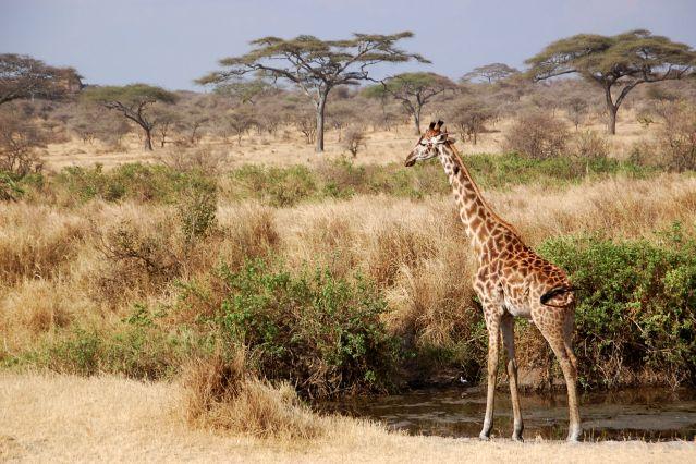 Voyage Safari porini