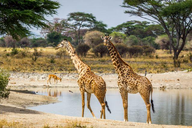 Voyage Safari, trilogie dans les parcs
