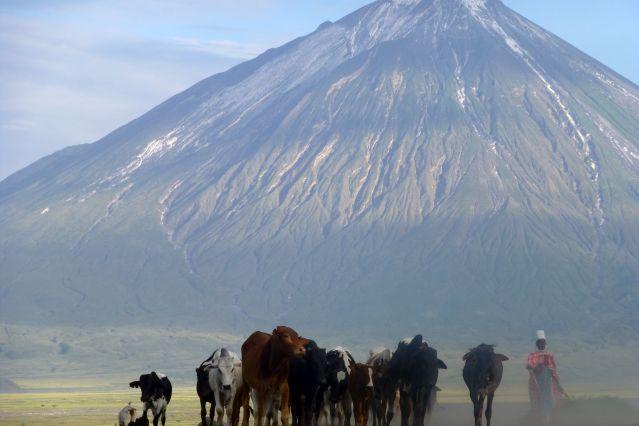 Voyage Dans la peau d'un Masaï, marche et safari