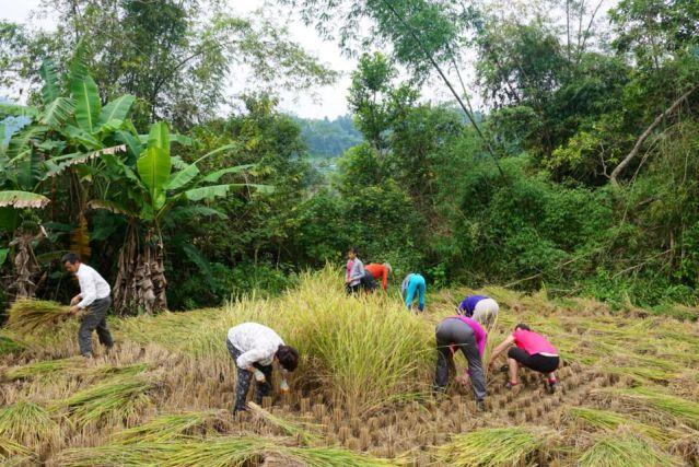 Travaux champêtres - Chu Lang - Vietnam