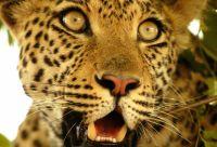Au coeur des réserves animalières du Botswana