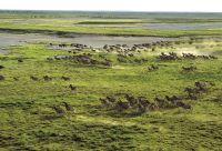 Désert du Kalahari et delta de l'Okavango