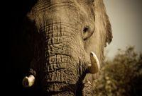 Safaris privés à Chobe, Savuti et Moremi