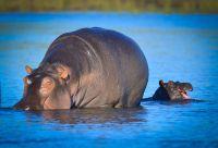 Botswana : le paradis des petits explorateurs
