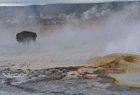 Aventures enneigées au Yellowstone
