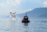 Baleines et orignaux du Québec