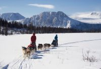 Yukon, l'appel du loup