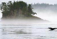 Kayak et orques de l'île de Vancouver