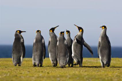 Mystérieuse Patagonie, de Pali Aike au Fitz Roy