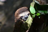 Entre volcans et océans, l'or vert du Costa Rica