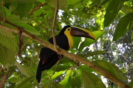 Cap sur le Corcovado, un nouvel Eldorado