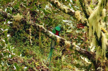 Trekking de Los Quetzales au Corcovado