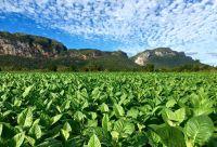 L'Ouest cubain, à l'ombre des mogotes