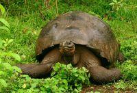 Archipel des Galápagos
