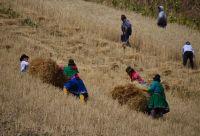 Au cœur des communautés andines