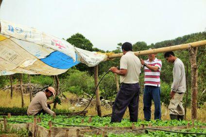 Culture et agriculture solidaires aux Galápagos