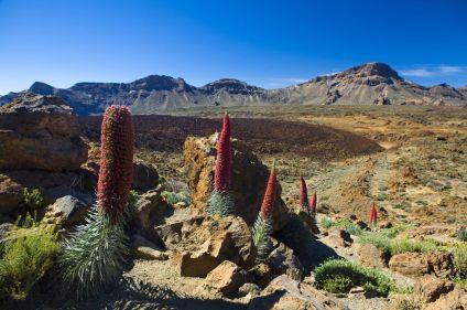 L'essentiel de Tenerife et La Gomera