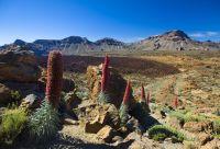 Tenerife, terre de contrastes