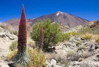 Tenerife et La Gomera par les sommets