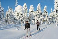 Ski de fond au cœur de la forêt boréale