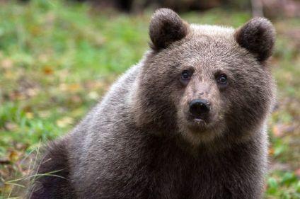 Eté indien et faune sauvage