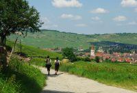 Vignobles et forteresses médiévales d'Alsace