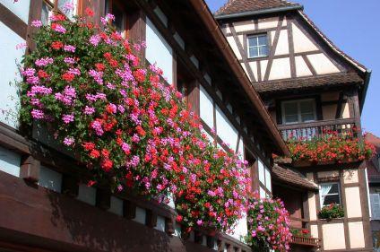 Cols vosgiens et Vins d'Alsace en vélo de route