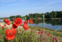 Loire à vélo : de Blois à Tours