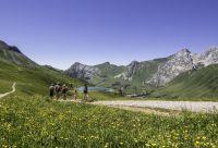 Balade avec un âne entre Léman et Mont-Blanc