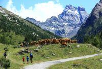 Queyras et piémonts, les Alpes du Soleil