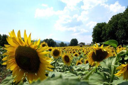 La Provence en liberté, des Alpilles au Luberon