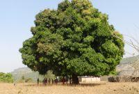 Trek en pays Soussou et contrefort du Fouta-Djalon