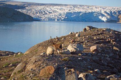 Expédition en kayak dans le fjord de Tasermiut
