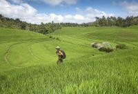 Trek En Indon 233 Sie Circuit Randonn 233 E Et Voyage En Indon 233 Sie