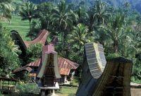 De Toraja à Bunaken, l'essentiel de Sulawesi