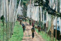 Sikkim et trek du Singalila